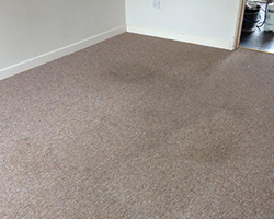 Exeter Carpet Cleaning